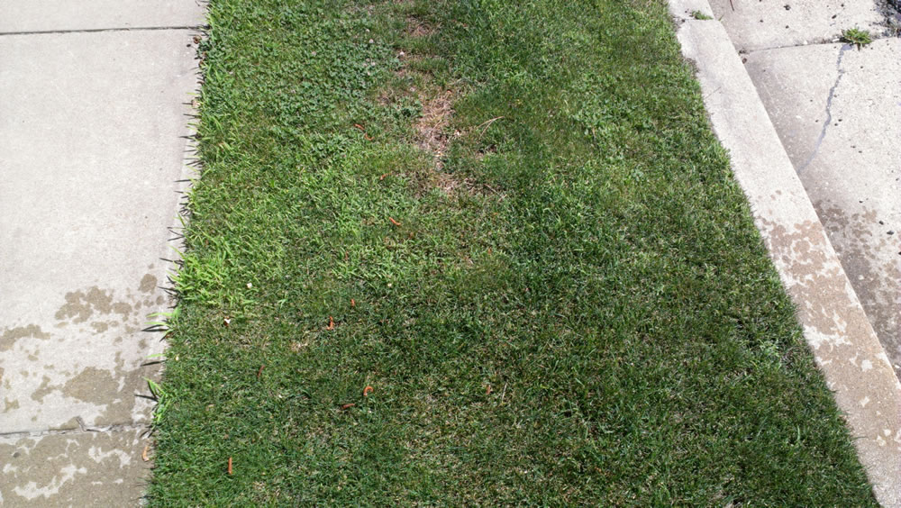 Yard with crabgrass